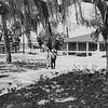 1970 oaks