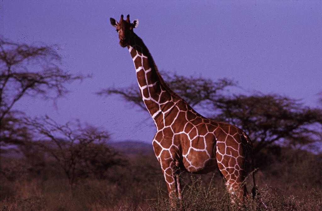 Afrika-6