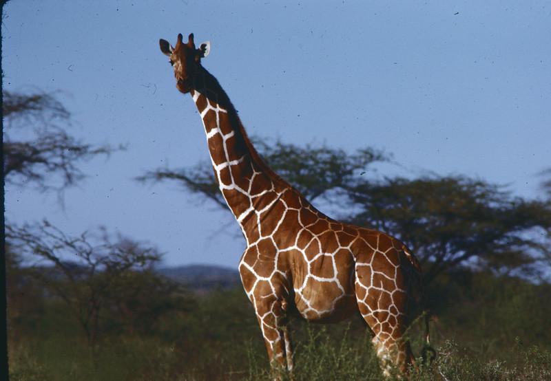 Fra en av Ørnulfs foto safarier til Afrika