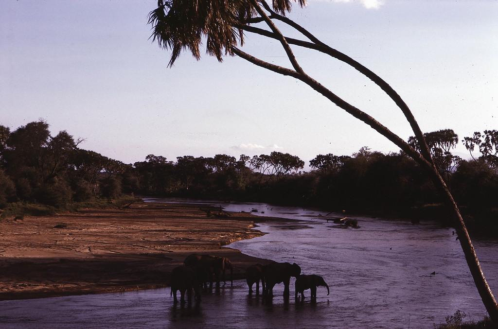 Et herlig stemningsbilde av elefantene som avkjøler seg i elva.