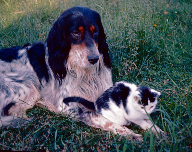 Boy og katt