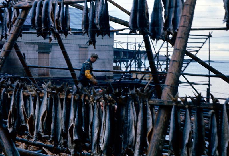 Arbeid på fiskegjell
