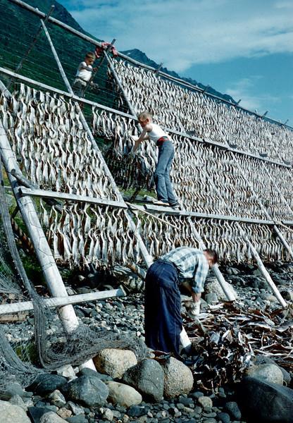 Arbeid på fiskegjell 2