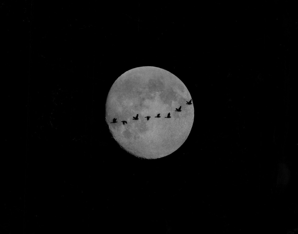 . DEC 29 1975.  The Time For Goose Hunting Is Flying Past.