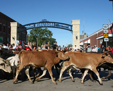 150th Anniversary cattle drive (Caldwell, KS)