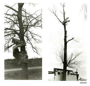 Pittfield Tornado Debris Trees.jpg