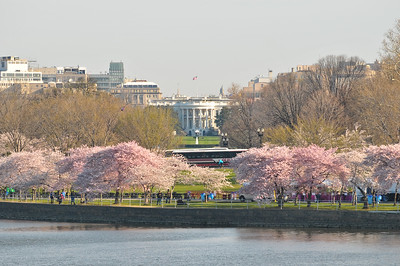 White House from the Jefferson Memorial