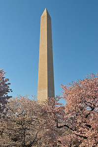 Cherry blossoms and the Washington Monument, Washington DC