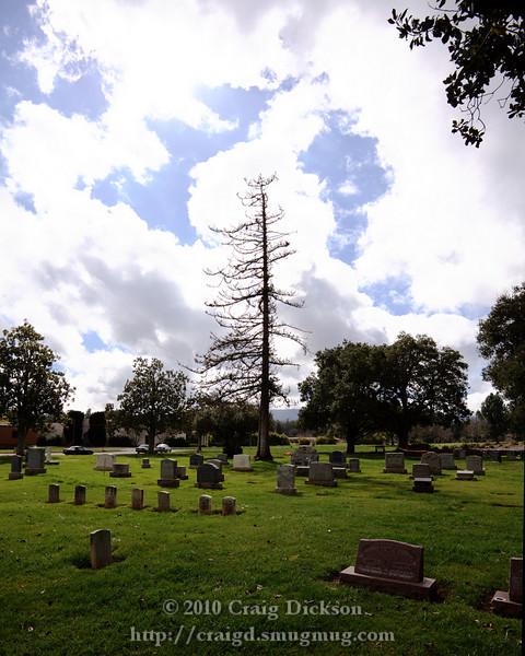 2010.02.24-03.03 Alta Mesa Memorial Park, Palo Alto
