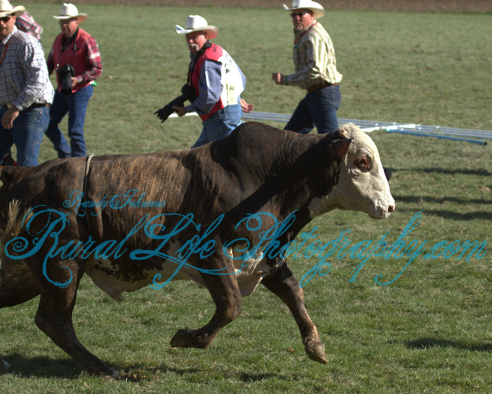The Bull gets out.<br /> And the PRCA Photographers run for cover.
