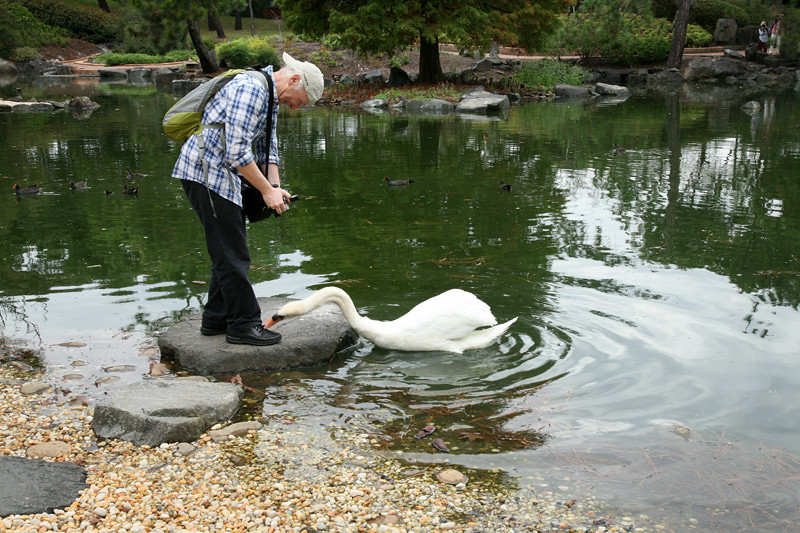 Trevor and the swan