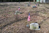 The graves of the Civil War Veterans are marked with American Flags.