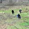 Amish walking home