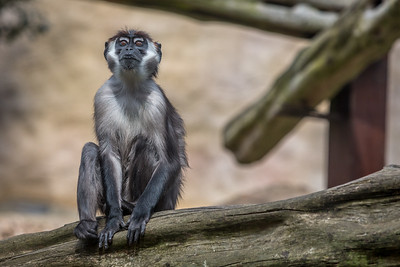 zoo-652