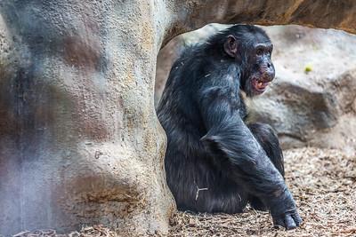 zoo-755