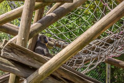 zoo-693