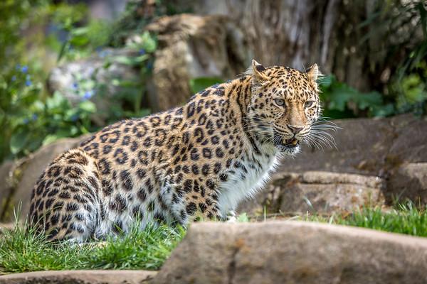 zoo-750