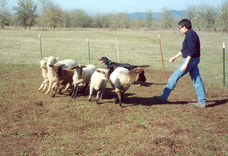 R Herding