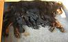 Juno babies