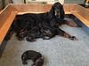 Juno & Babies 1 week