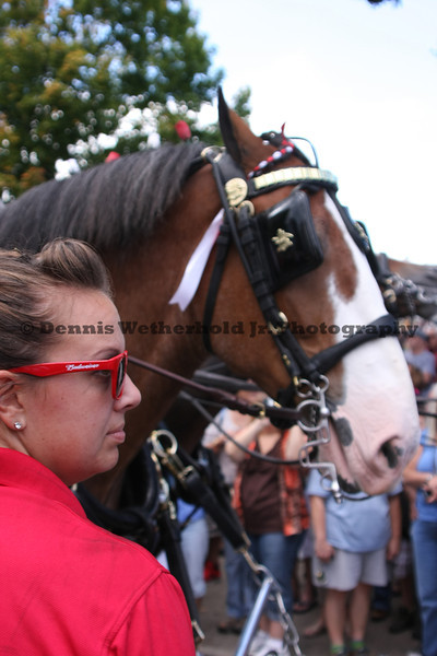 9/13/13 - Budweiser Clydesdales in Easton