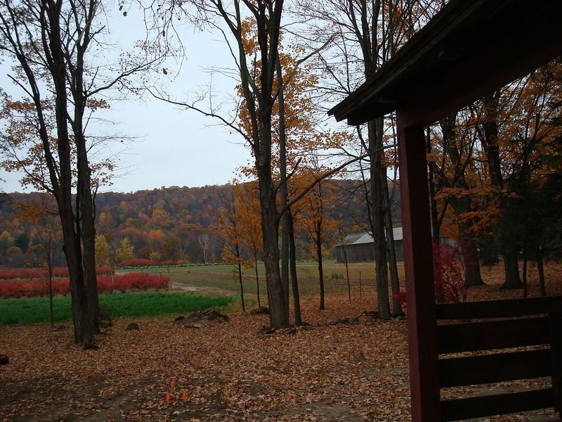 Backyard View - Provin Mt