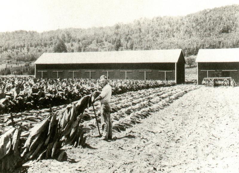 Feeding Hills Kerr Tobacco Farm