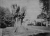 Agawam Fallen Giant Elm Removed 1963