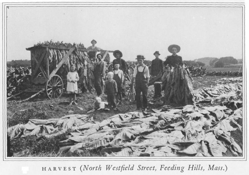 Feeding Halls Harvest