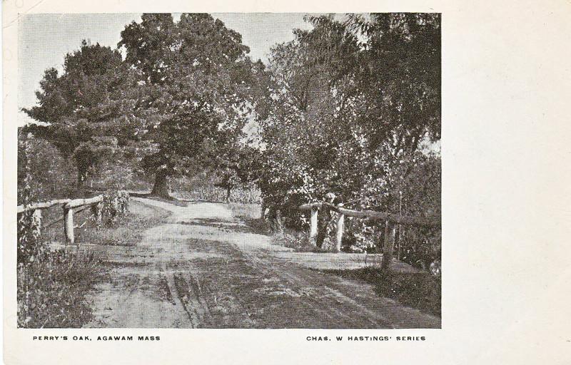 Agawam Perry's Oak