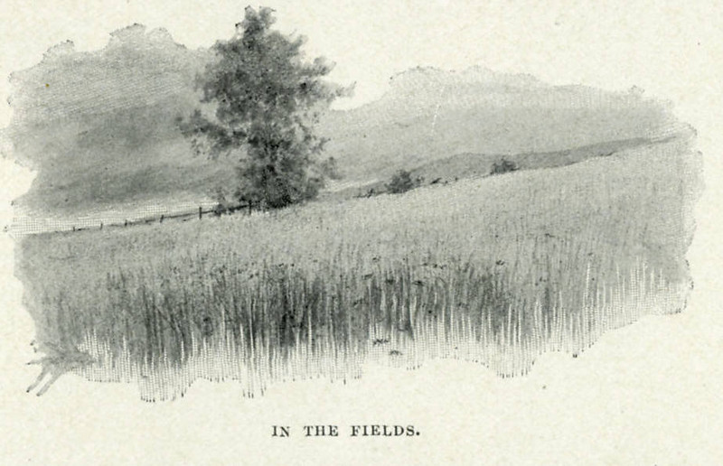Feeding Hills In the Fields