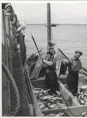 1949_libby_Toivo_Ranta_Bristol_Bay_Naknek_sailboats