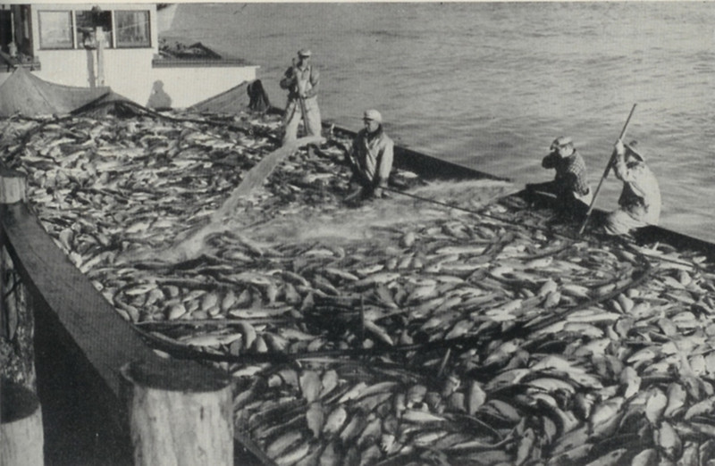 1942_Bristol_Bay_35_000_Red_Salmon