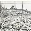 1948_Libby_53_55_Tally_scow_Naknek_Bristol_Bay_Sailboats