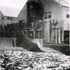 1948 Naknek CRPA,Ralph Hendrickson Supertendent,Scow of Red Salmon,