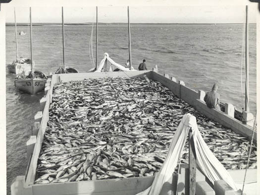 1948_Libby_25_43_tally_scow_Naknek_Bristol_Bay_Sailboats