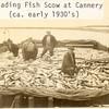 1930_s_Unloading_Scow_sailboats_Naknek