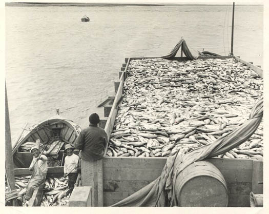 1949_Libby_Graveyard_tally_scow_Bristol_Bay_sailboats_Naknek