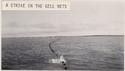 1947_Bristol_Bay_Corkline_strike_CRPA_sailboats
