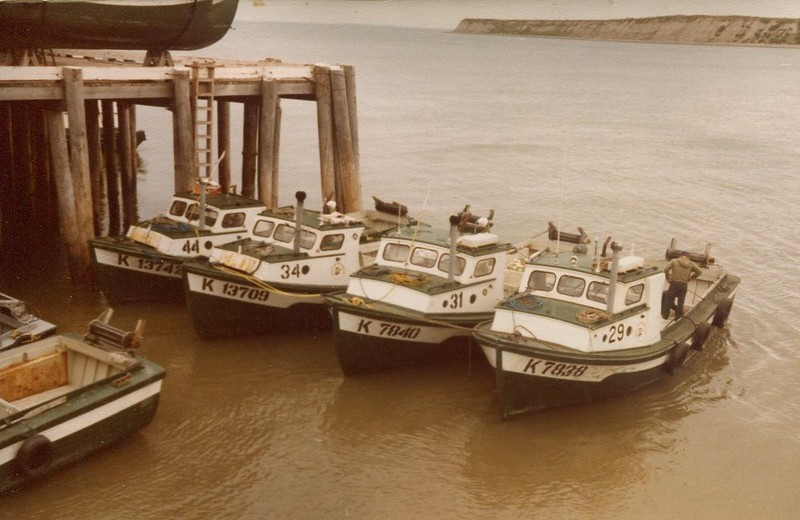 BB 44  34  31  29  Bumble Bee  Bristol Bay 1980