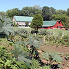 Beautiful garden at Museum of Appalachia<br /> Castor beans, morning glories, onions, beans, peppers, tomatoes, potatoes and various herbs!