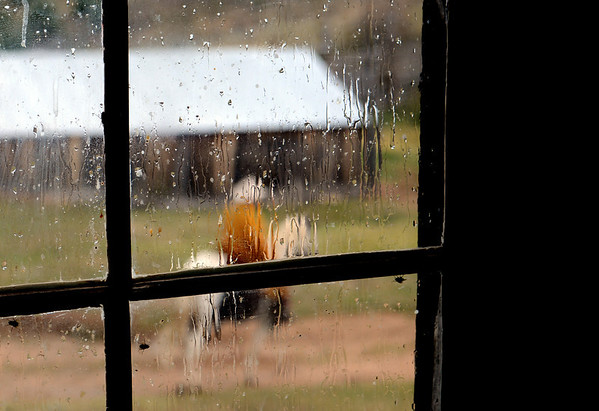 "Cowboy Fred can be seen riding Sky in the rain at Walker Ranch.<br /> Walker Ranch celebrated Autumn with a demonstration of life in the 1880's and a vintage baseball game on Sunday.<br /> For more photos and a video of Walker Ranch, go to  <a href=""http://www.dailycamera.com"">http://www.dailycamera.com</a>.<br /> Cliff Grassmick  / September 30, 2012"