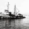 Sea Lark,Converted 165 ATR Navy Tug,Frank Medina,Nick Dragich,Bait Boat,Later Nick Bez,