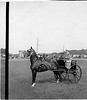 Keystone stereoview of unidentified cup winner, Oakwood Driving Park, undated.