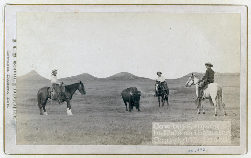 Title: Cowboys, roping a buffalo on the plains<br /> Three cowboys on horses roping a buffalo. [between 1887 and 1892]<br /> Repository: Library of Congress Prints and Photographs Division Washington, D.C. 20540