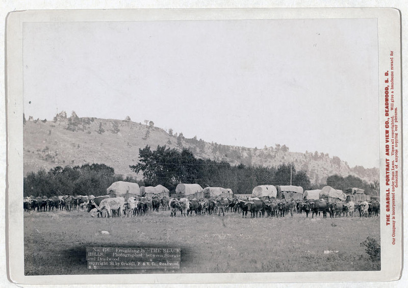 "Title: Freighting in ""The Black Hills"". Photographed between Sturgis and Deadwood<br /> Full view of ox trains, between Sturgis and Deadwood, S.D. 1891.<br /> Repository: Library of Congress Prints and Photographs Division Washington, D.C. 20540"