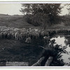 "Title: ""The shepherd and flock."" On F.E. & M.V. R'y. in Dakota<br /> Flock of sheep at pond of water. 1891.<br /> Repository: Library of Congress Prints and Photographs Division Washington, D.C. 20540"