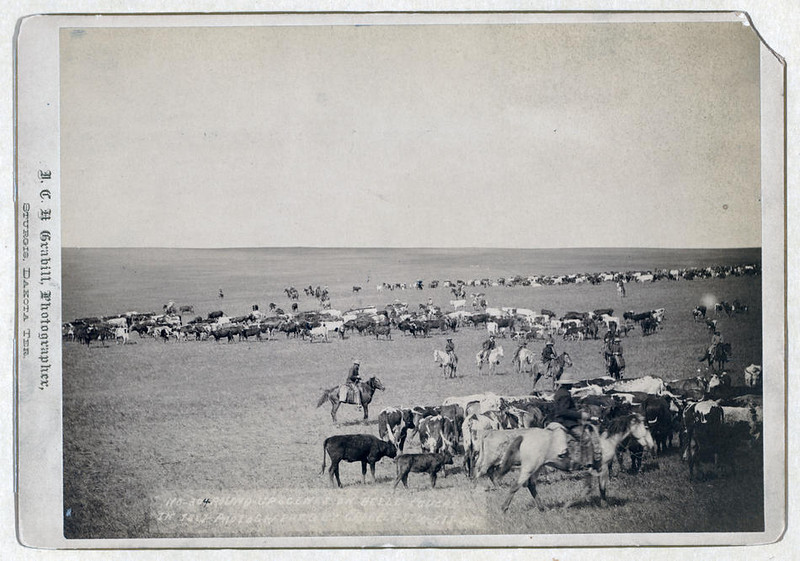 Title: Round-up scenes on Belle Fouche [sic] in 1887<br /> Cowboys and cattle on range.<br /> Repository: Library of Congress Prints and Photographs Division Washington, D.C. 20540