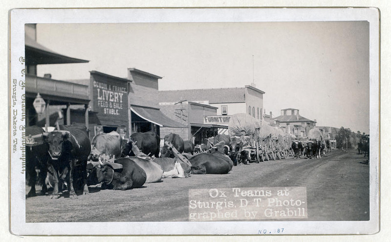Title: Ox teams at Sturgis, D.T. [i.e. Dakota Territory]<br /> Line of oxen and wagons along main street. [between 1887 and 1892]<br /> Repository: Library of Congress Prints and Photographs Division Washington, D.C. 20540