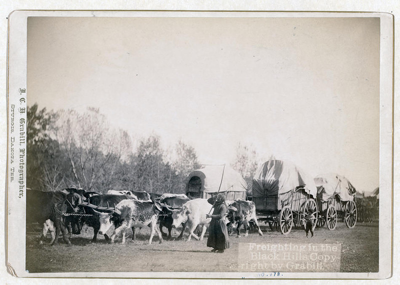 Title: Freighting in the Black Hills<br /> A woman and a boy using bullwhackers to control a train of oxen. [between 1887 and 1892]<br /> Repository: Library of Congress Prints and Photographs Division Washington, D.C. 20540